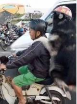 З'явилося відео собаки, яка розумніше багатьох мотоциклістів в Україні